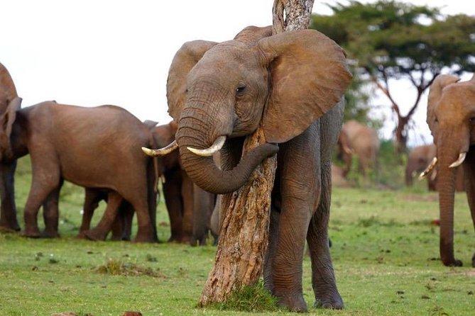 Nakuru and Naivasha Lake Maasai Mara 5-Day Private Safari
