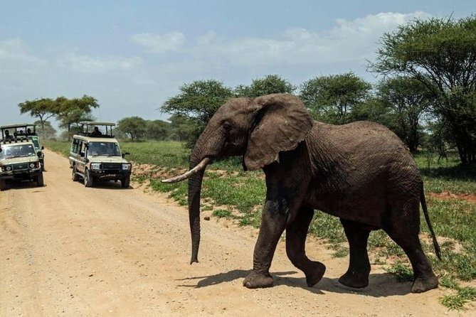Day Tour To Amboseli National Park From Nairobi