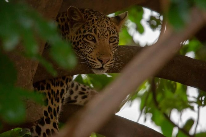 2 Day Wildlife Experience and Masai Culture Mikumi Park