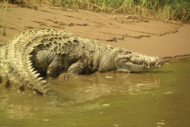 Full-Day Private Nature and Wildlife Tour in Costa Rica