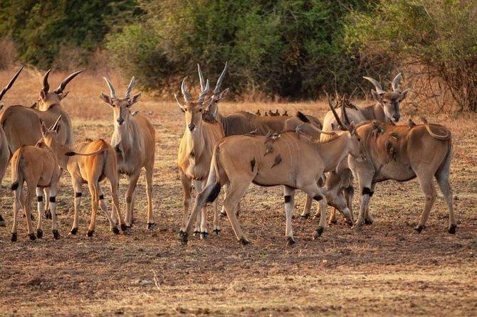 5-Day Norther Tanzania Luxury Safari