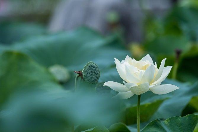 Lotus Experience