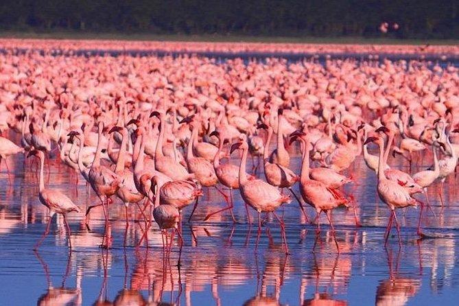 Full-Day Guided Safari Tour of Lake Nakuru National Park