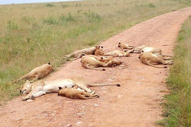 2 Days Maasai Mara National Reserve Safari from Nairobi