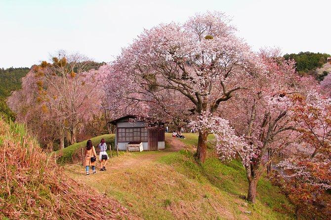 Nara Custom Full Day Tour