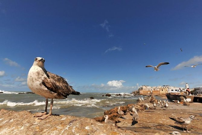 Full-Day Tour to Essaouira from Marrakech with Hotel Pick Up