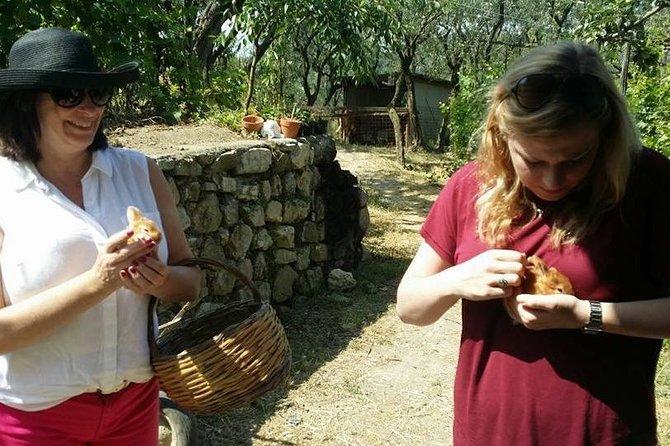 7 Days Amalfi Coast, Sorrento, Capri Cooking and Tours Adventure