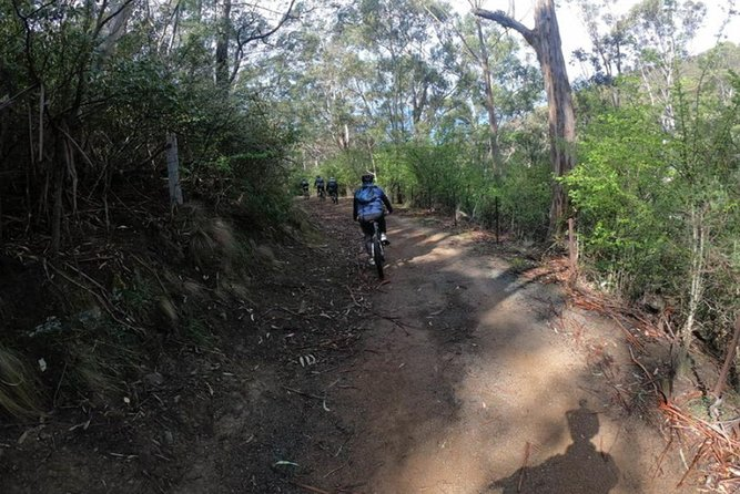 Explore Downhill Mountain in 3-Hour Bike Tour from Hobart