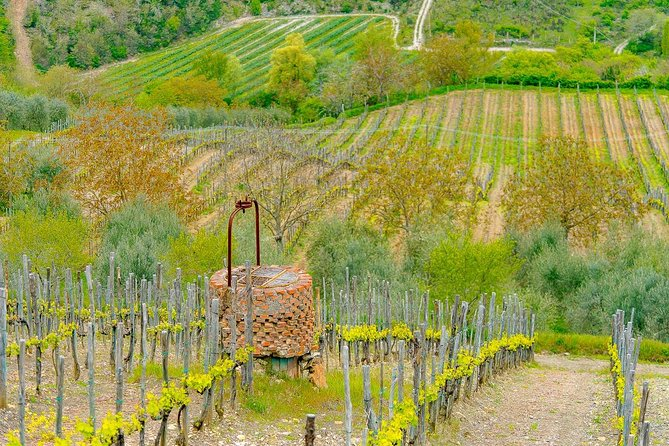 Small group Chianti Classico Wine-Food Tour from Montevarchi.Boutique wineries.