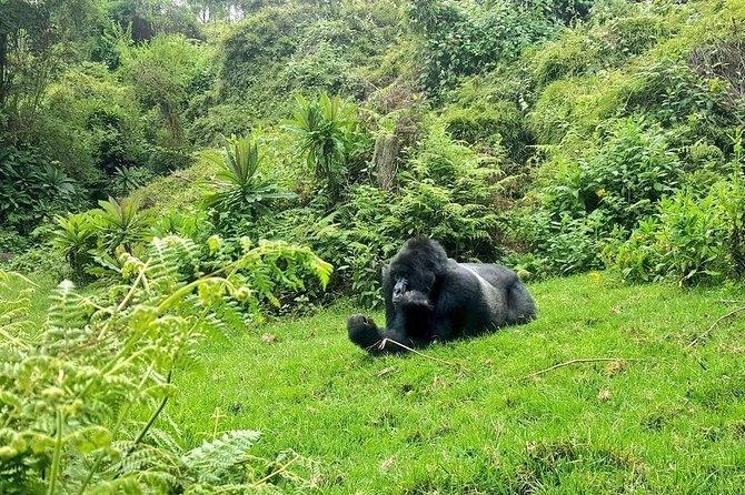 Full-Day Gorilla Trekking in Rwanda