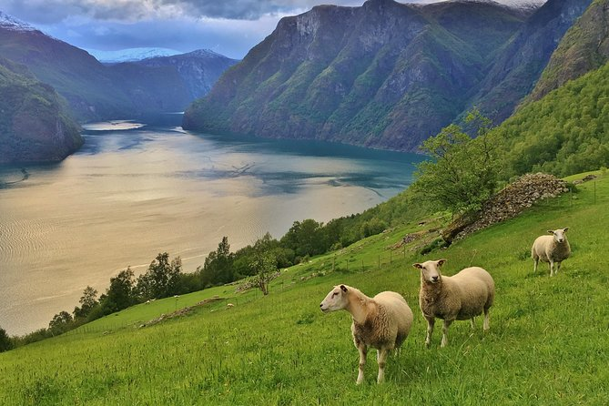 ALL ELECTRIC: Emission free tour to the World Heritage Fjords, 13 hours