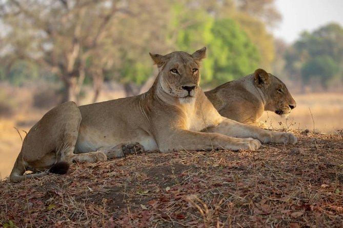 8-Day Luxury Wildlife Safari in Northern Tanzania