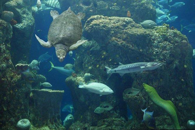 Billet d'entrée à l'aquarium de Caroline du Sud