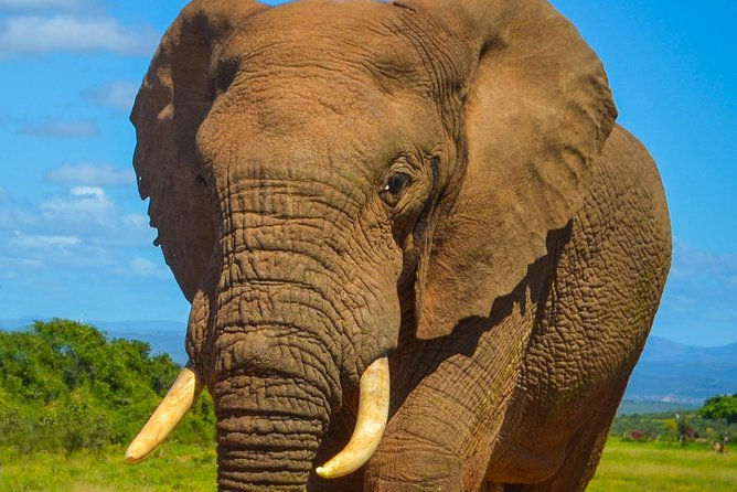 Addo Elephant National Park Safari Tour with Guide