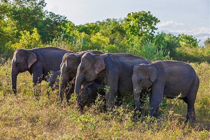 Udawalawa National Park Private Safari Tour - Customize tour