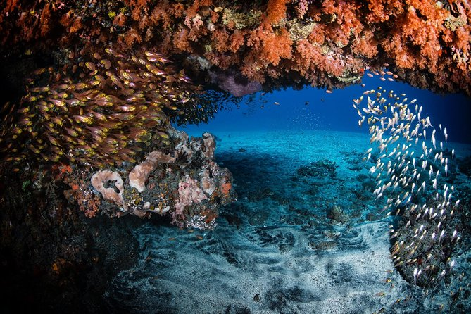 Discover Scuba Diving in Tulamben - Diving Initiation in Bali best diving sites