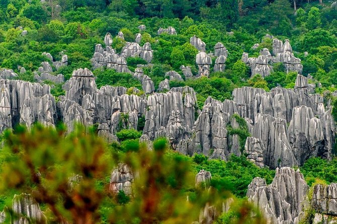 Full-Day Private Tour in Stone Forest on Kunming