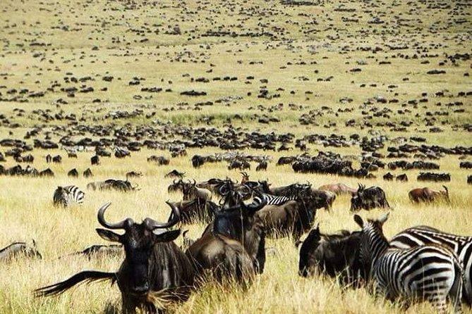 Private 6-Day Wildebeest Migration Safari + Hazdabe Lake Eyasi