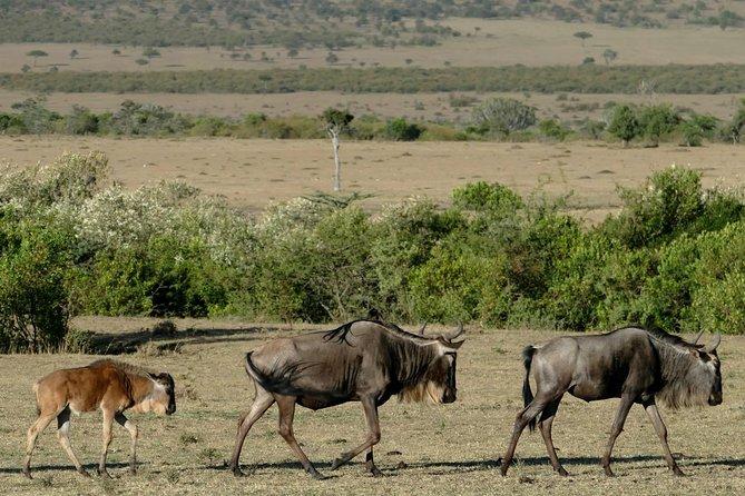 Masai Mara and Serengeti Private 12-Day Safari from Nairobi