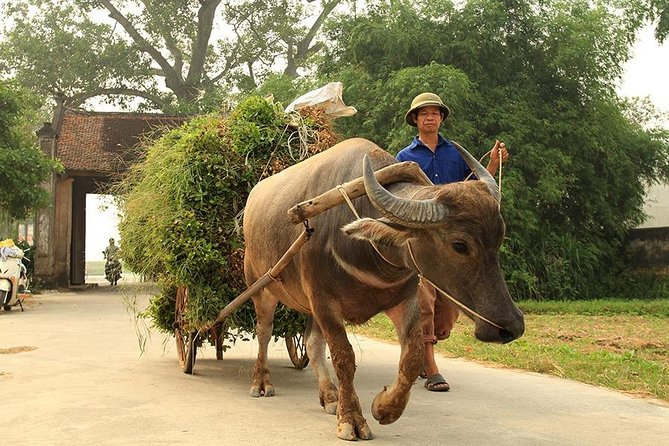 Full-Day Duong Lam Ancient Village Cultural Guided Experience