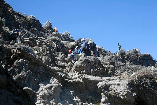 7-Day Lemosho Route - Kilimanjaro Climbing