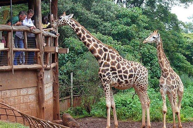 Giraffe Center Half-Day Guided Tour from Nairobi