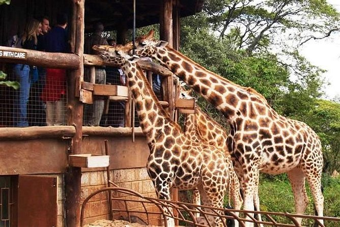 Nairobi National Park, Elephant Orphanage, Giraffe Center & Karen Blixen Museum