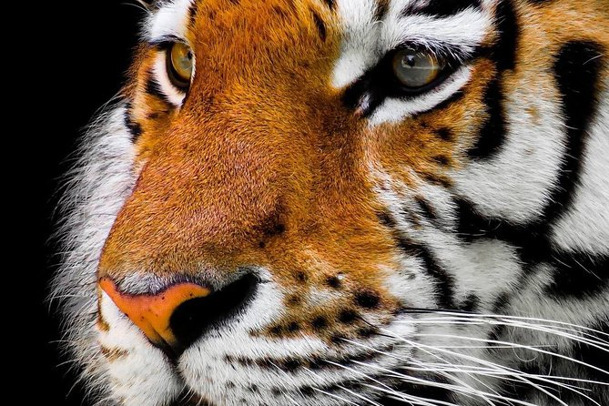 Pilibhit Tiger Reserve from Delhi