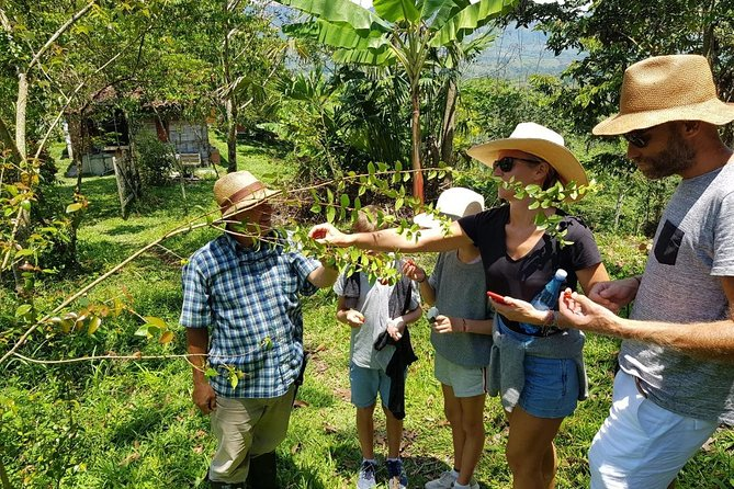 3-Day Private Guided Cultural Tour of Andes the Coffee Region