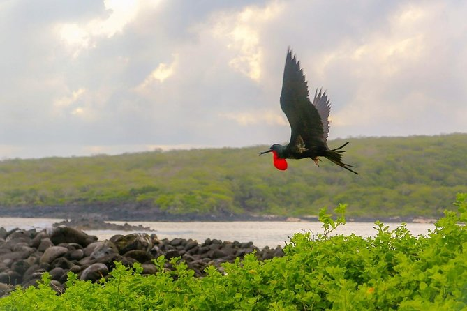 Tour 08 days 07 Nights - GALAPAGOS SPECIAL- (Island Hopping)