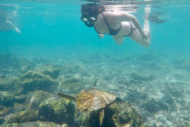 Los Tunnels & Cabo de Rosa (Isabela Island) Tour
