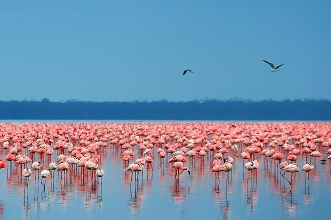 5-Day Aberdares Lake Nakuru and Maasai Mara Private Tour