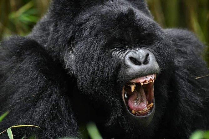 32-Days Mara, Amboseli, Nakuru, Bogoria, Gorilla-trek, Serengeti,Rwanda Genocide