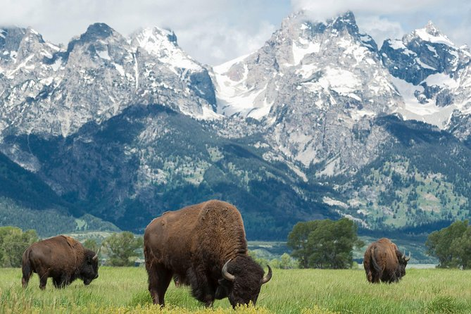 Full-Day Guided Sightseeing Tour of Grand Teton National Park