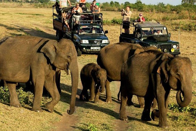 Full-Day Private Safari to Yala National Park from Kalutara