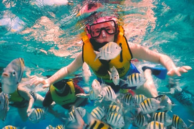 Complete snorkel tour at Cozumel from Cancun or Riviera Maya for the best price
