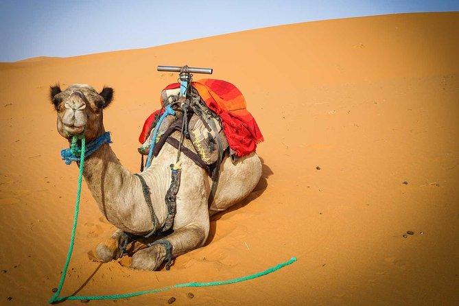 5 Days Merzouga Sahara Tour from Marrakech with Pickup