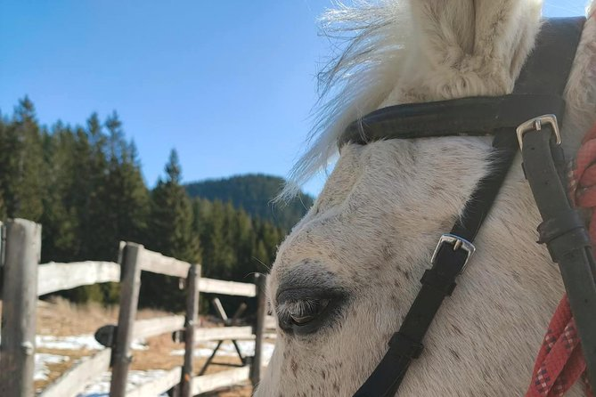 Horse Riding Lessons at the Heart of the Rose Valley