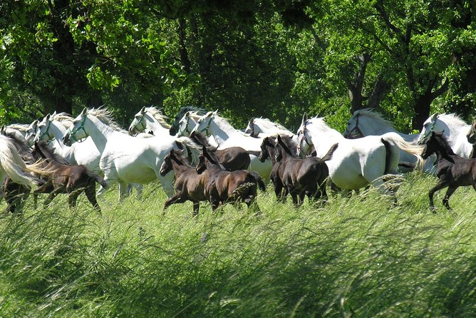 Heritage of the Stud farm and lipizzan horses - Lipica