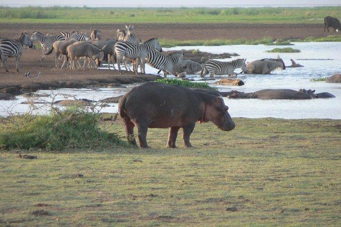3 Days Tour to Tarangire, Lake Manyara and Ngorongoro