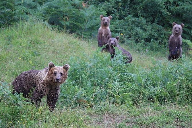 Observing and Discovering Bears in Their Natural Habitat