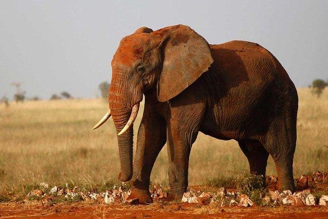4 Days Private Wildlife Safari in Amboseli and Tsavo