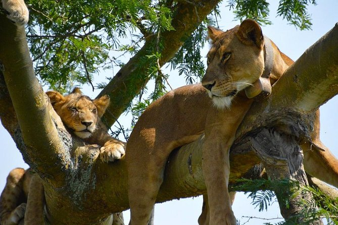 Private 7 Day Wildlife Safari from Mgahinga