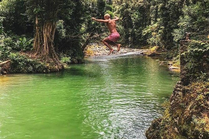 Explore The Rainforest Experience