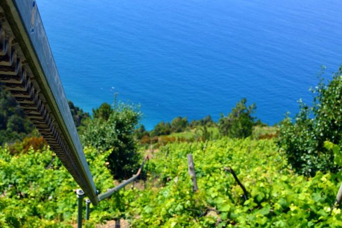 Private Cinque Terre Villages and Vineyards