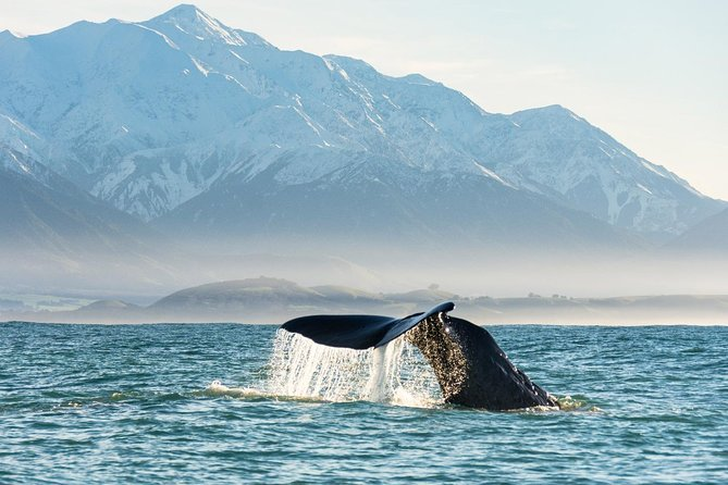 Full-Day Private Tour Whale Watch in Kaikoura
