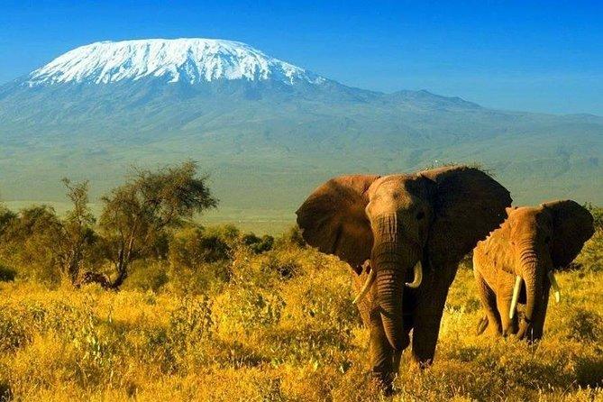 4 Days Nairobi-Amboseli-Nakuru Safari