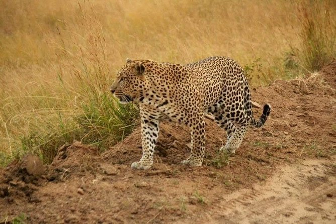 12-Day Tsavo west Amboseli lake Nakuru Maasai Mara safari