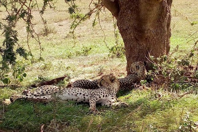 4-Day Private Northern Tanzania Safari Tour with Pick Up