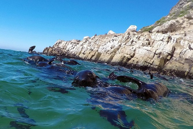 1.5-Hour Seal Viewing Boat Tour in Plettenberg Bay